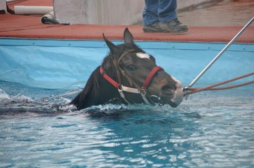 泳いでいる馬のアップ